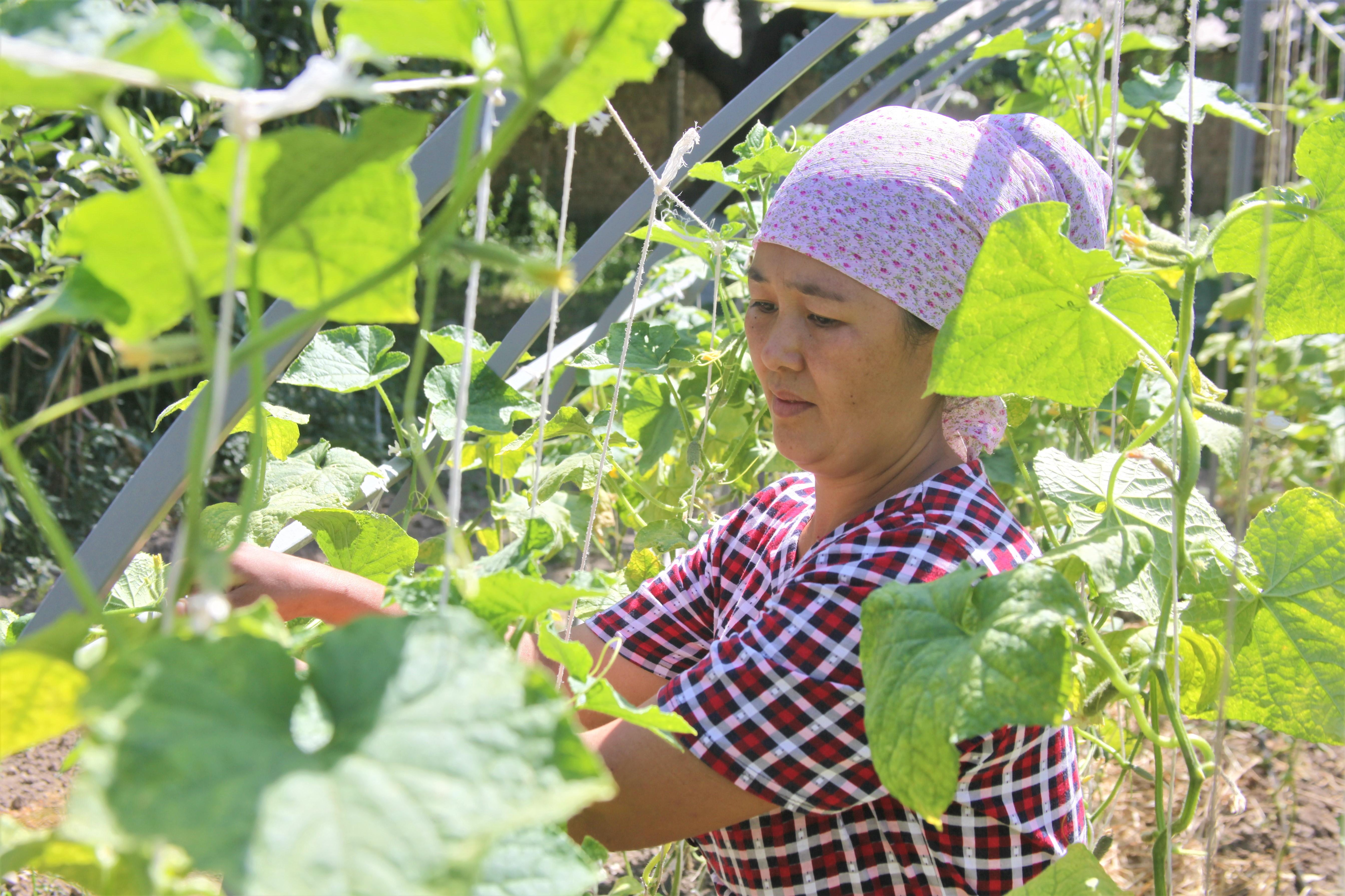 A woman in the garden in Kyrgyzstan.