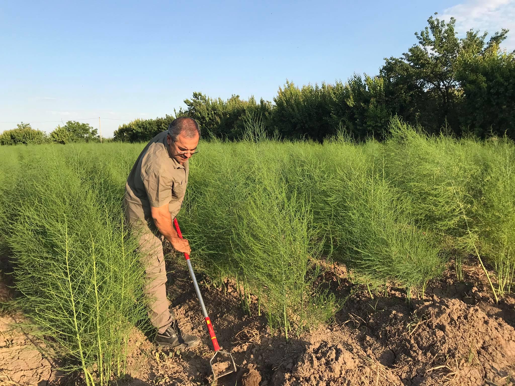 Karen Gabrielyan working in his field.